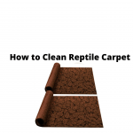 How to clean reptile carpet
