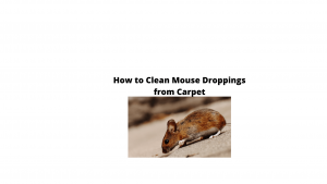 How to clean mouse droppings from carpet